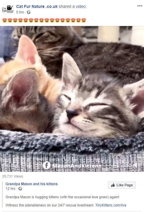 Screenshot of Cat Fur Nature post